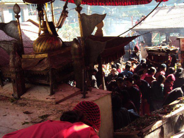 ネパール ダクシンカリ カーリー祭