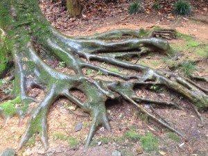 恐竜の足のような木