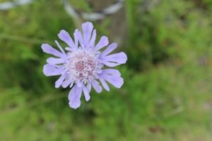 榛名富士で見つけた花