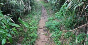 ジュゴンの見える丘に続く山道