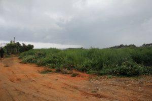 ジュゴンの見える丘の手前の平野