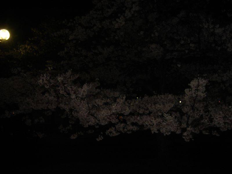 夜櫻(嵐山にて)