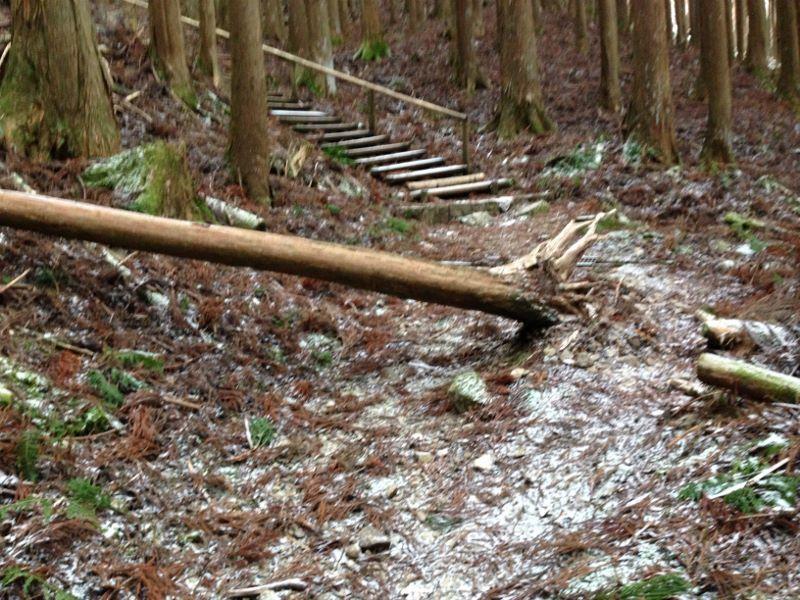 大峯山登山道中 倒れた木