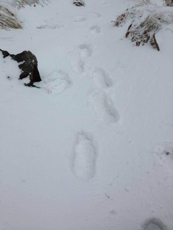大峯山積雪10センチ以上