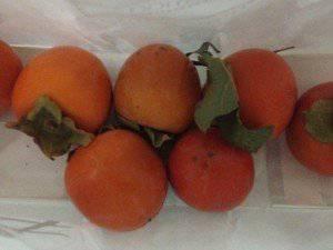 近所で採れた柿