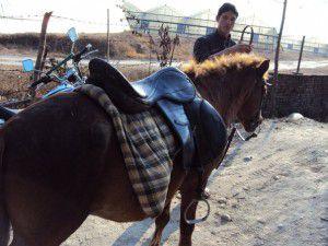 ネパール 乗馬