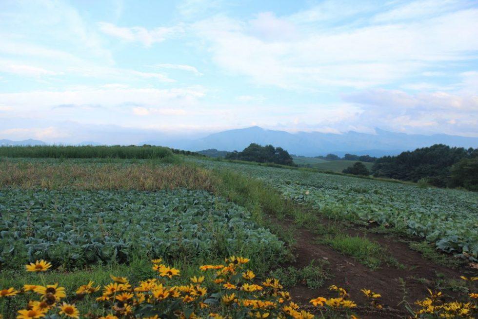 嬬恋キャベツ畑2