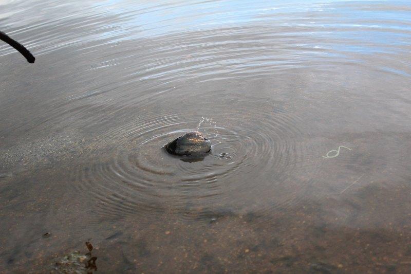 宝ヶ池のお茶目な貝