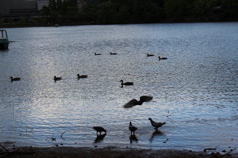 宝ヶ池の鳥たち