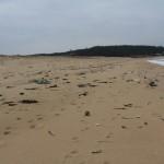 琴引浜のゴミ