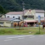榛名高原駅前で乗馬