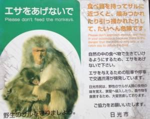 猿に餌をあげないで