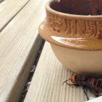 釜飯の釜とスズメバチ