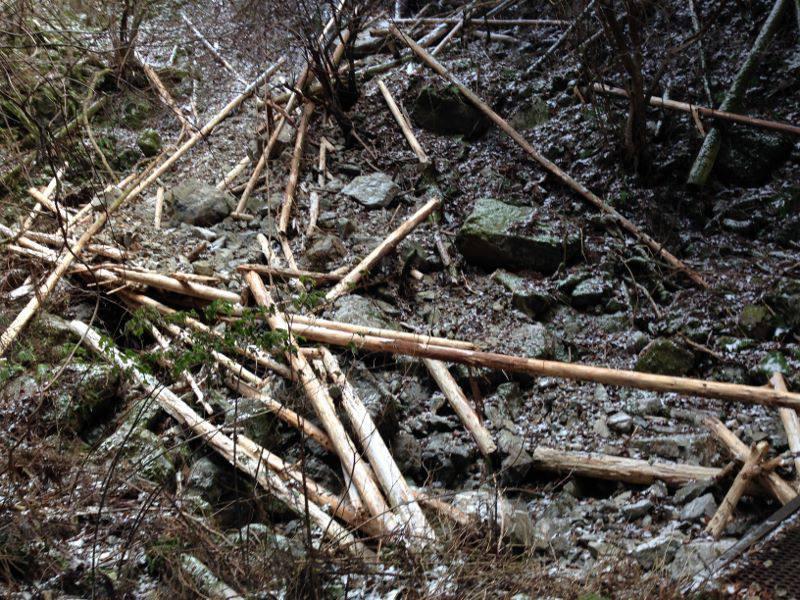 大峯山登山道中 倒れた木2