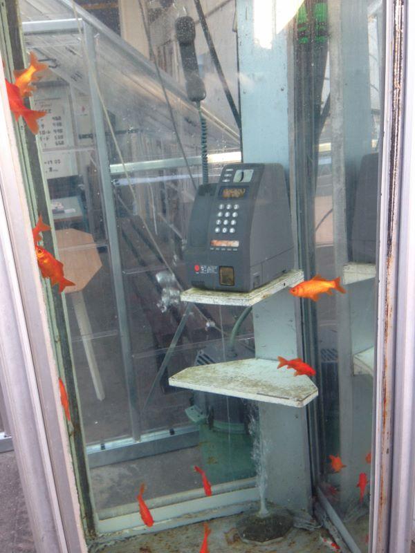 金魚電話ボックス 奈良県大和郡山市
