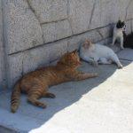 真鍋島の島猫