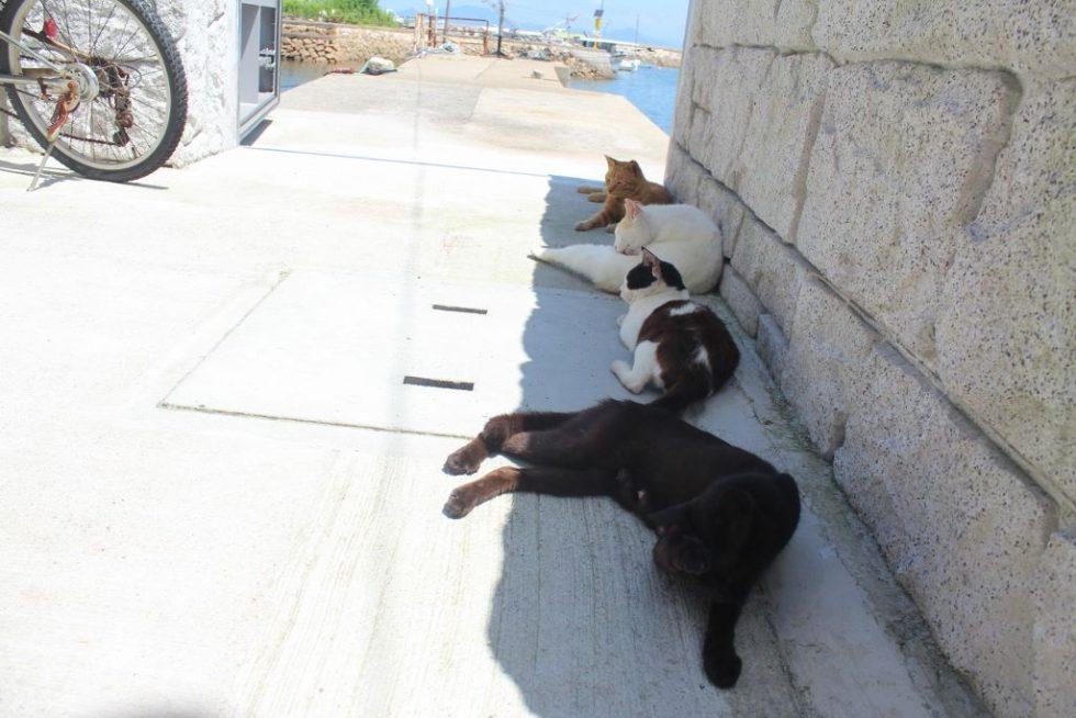 真鍋島の島猫2