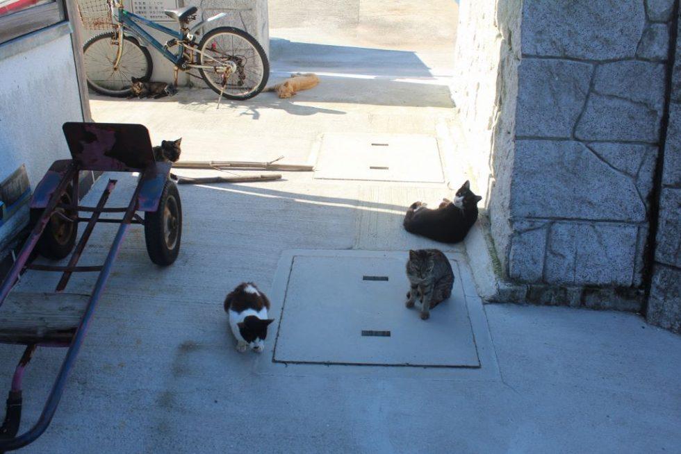 真鍋島の島猫5