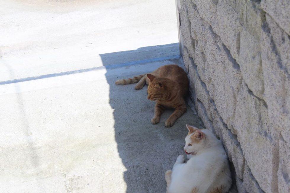 真鍋島の島猫3