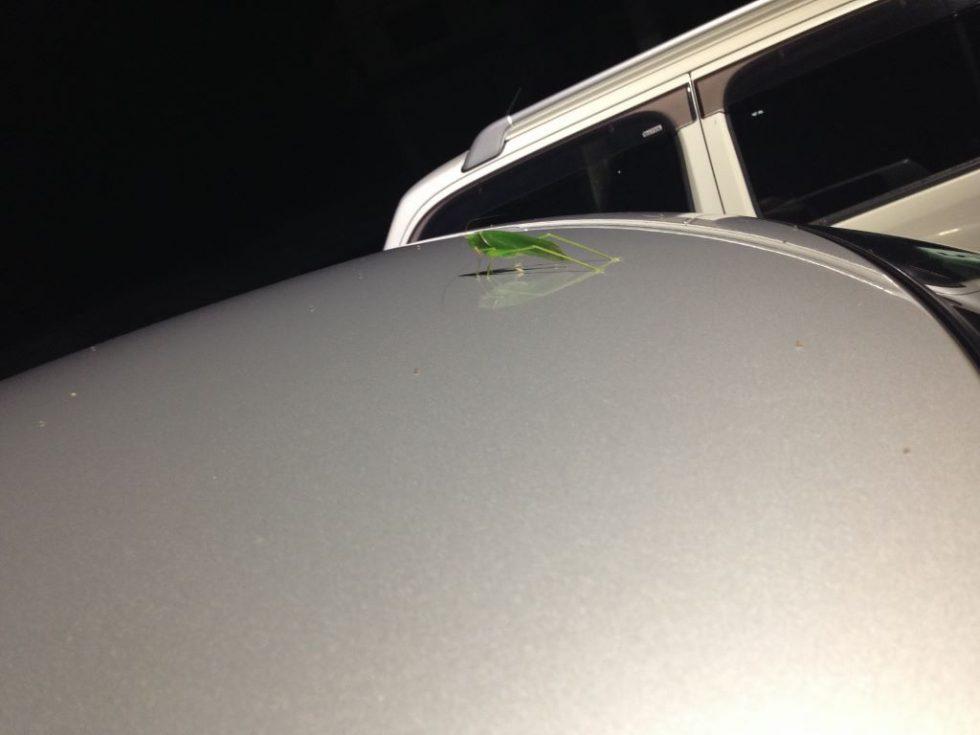車の上にキリギリス