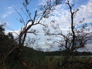 台風の影響で枝が折れた木々 広沢池にて