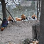 神戸どうぶつ王国の鳥たち