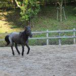 駆け抜ける馬 六甲山牧場