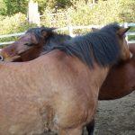 馬の相互扶助精神