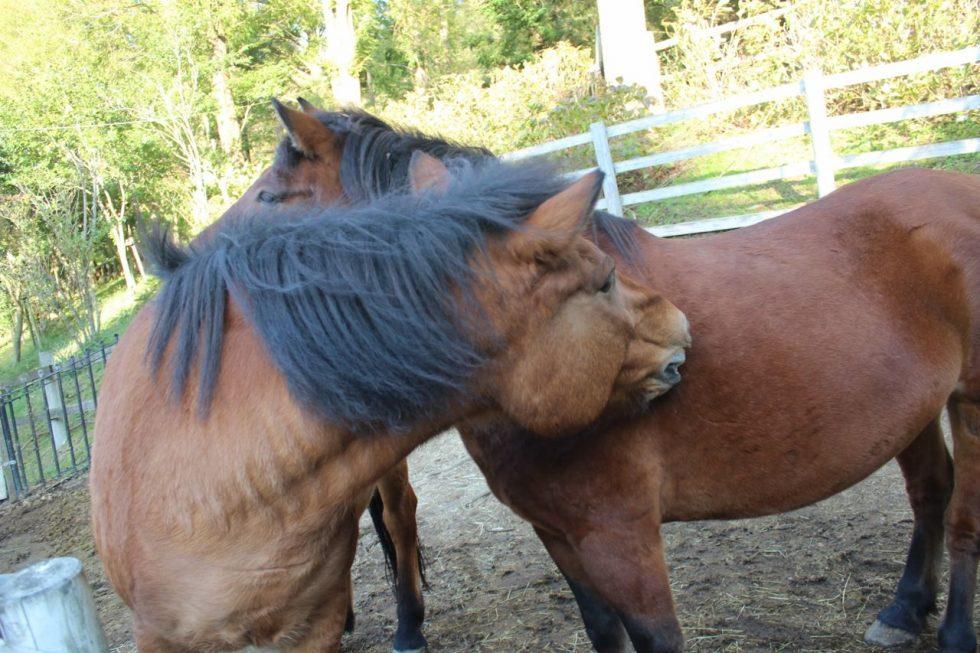 木曽馬 馬たちのふれあい