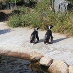 ペンギン 神戸どうぶつ王国
