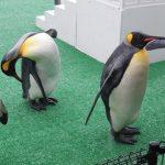 ペンギンのおさんぽ