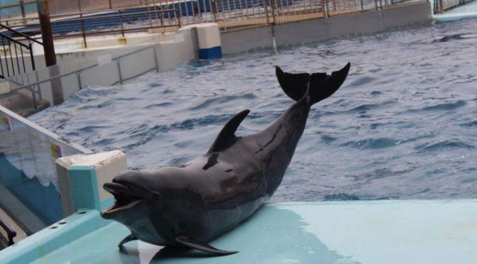 美しくたくましく福井県 2019 越前松島水族館