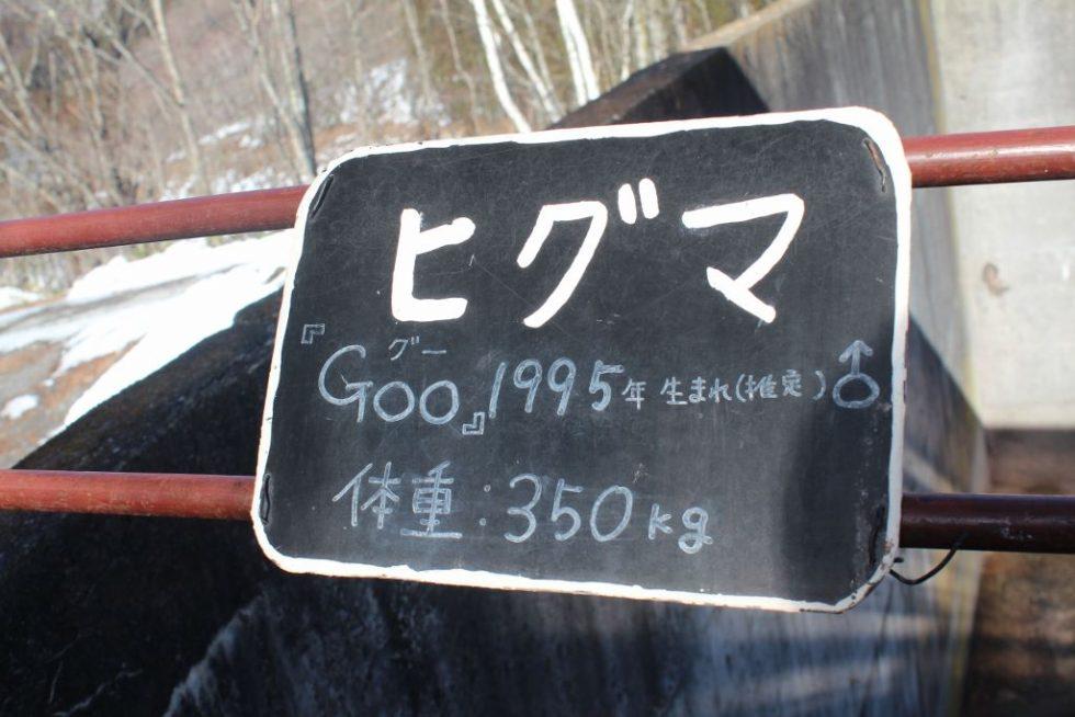 ヒグマのGoo(グー)ちゃん プロフィール