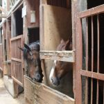 大山乗馬センター 厩舎内 お馬さんたち4