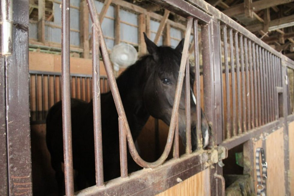 大山乗馬センター 厩舎内 お馬さんたち5