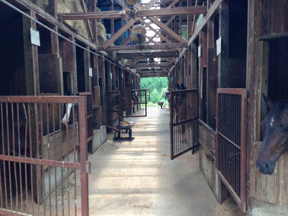 大山乗馬センター 厩舎ガイドツアー