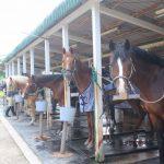 乗馬スタンバイ中のお馬さんたち