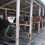大山乗馬センター お馬さんたち