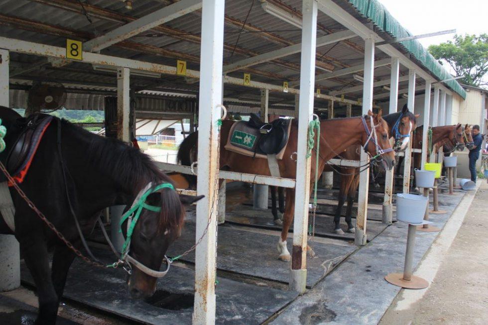 大山乗馬センター 馬
