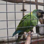 草津熱帯圏 鳥類 インコ ヨウム オオサイチョウ