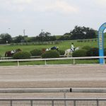 パドックに向かう競走馬たち