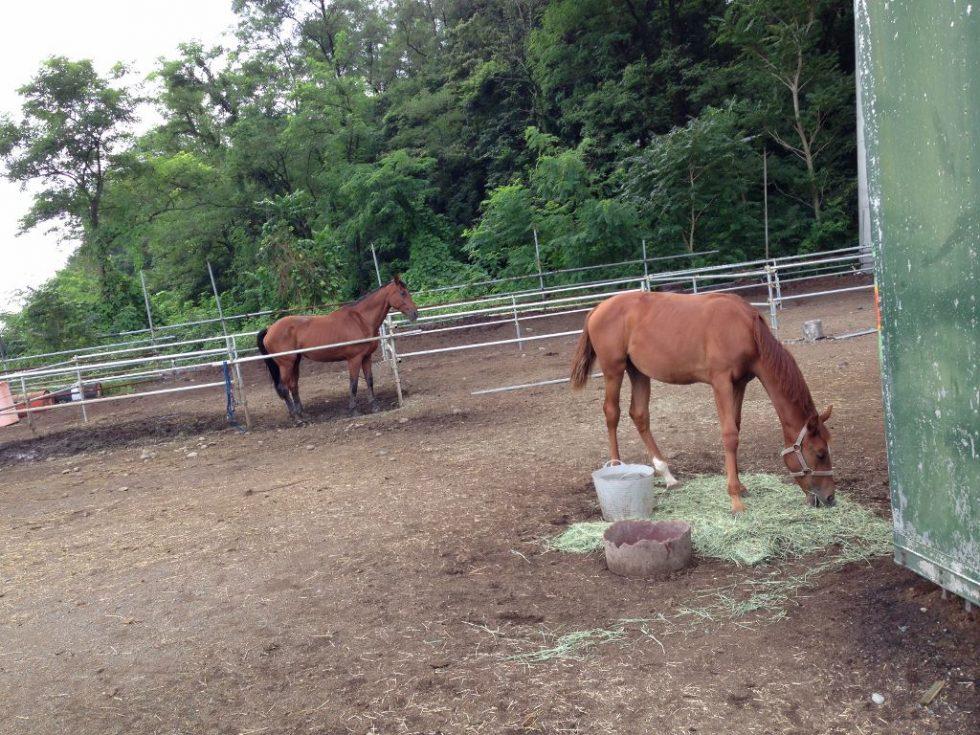 仔馬 エトワール 食餌の時間