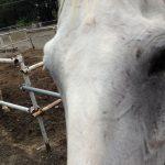 赤城乗馬クラブのお馬さんたち4