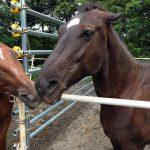 牝馬同士の争い