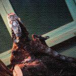 Photo Gallery 爬虫類 両生類