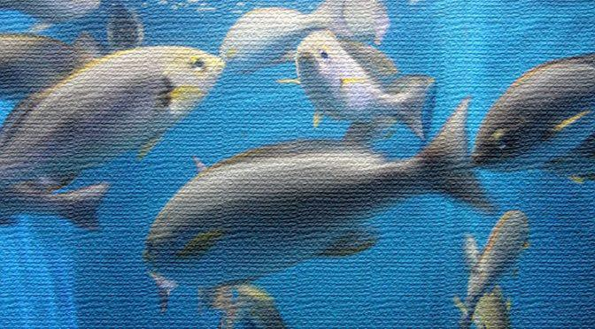 Photo Gallery 魚