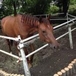 赤城乗馬クラブのお馬さんたち3