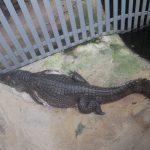 草津熱帯圏 爬虫類コーナー