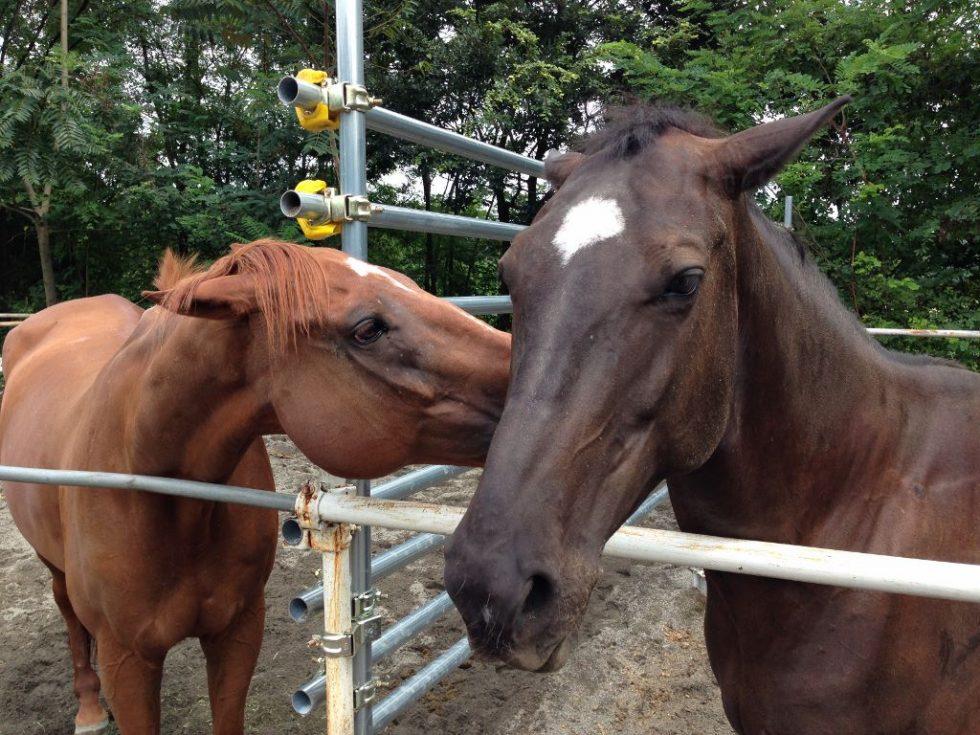 牝馬同士の争い3