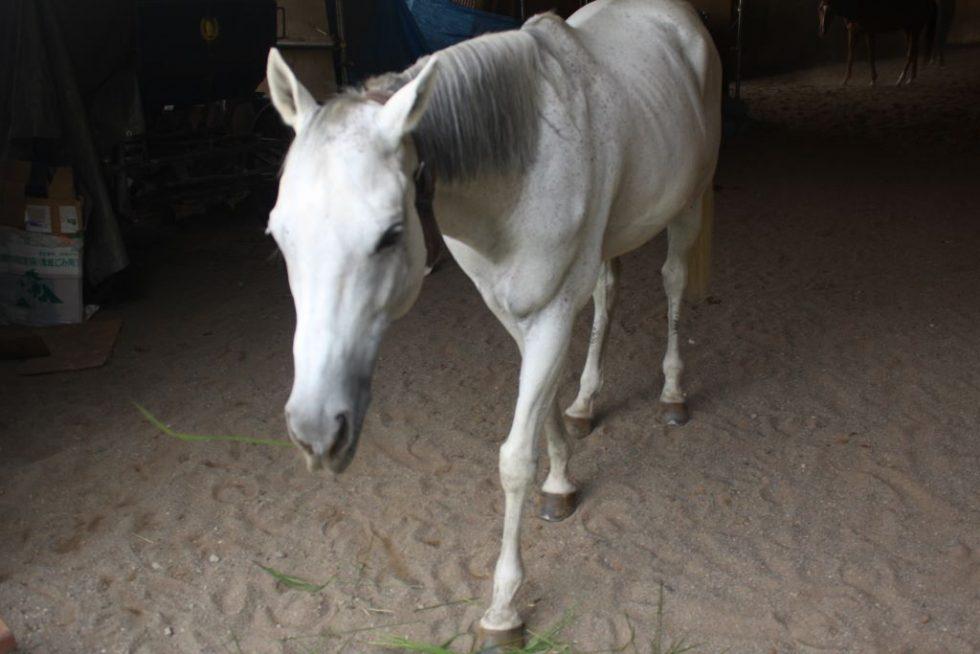 赤城乗馬クラブのお馬さんたち8